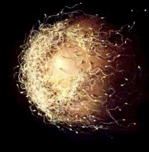 sperme.jpg